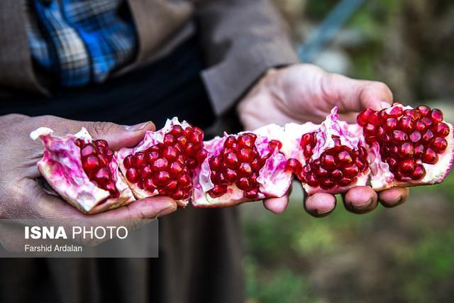 جشنواره انار؛ فرصتی برای معرفی پتانسیل های گردشگری منطقه اورامان