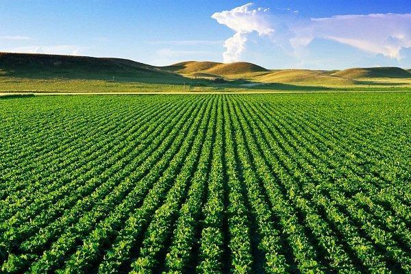 عمده محصولات کشاورزی کرمانشاه استراتژیک است