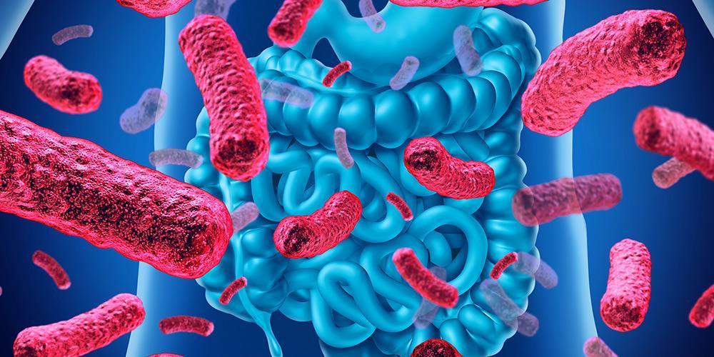 پروبیوتیک چیست ؟ همه آنچه که باید درباره پروبیوتیک ها بدانید