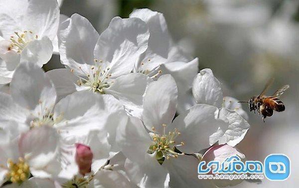 راهکاری برای پاکسازی کبد و سبک شدن بدن در بهار