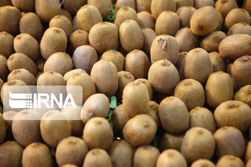 خبرنگاران پارسال 200 میلیون دلار کیوی و مرکبات از مازندران صادر شد