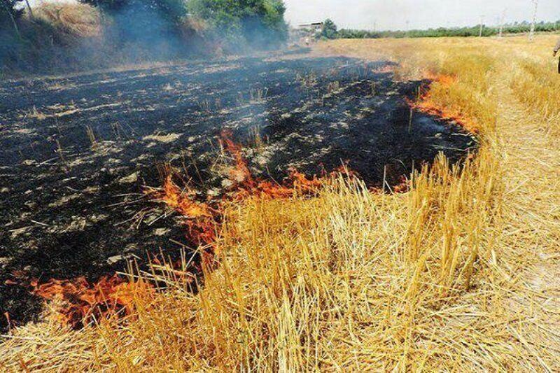 خبرنگاران 10 هکتار از مزارع گندم روستای هلوش پلدختر در آتش سوخت
