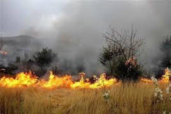 مهار کامل آتش سوزی در جنگل ها و مراتع پیچاب
