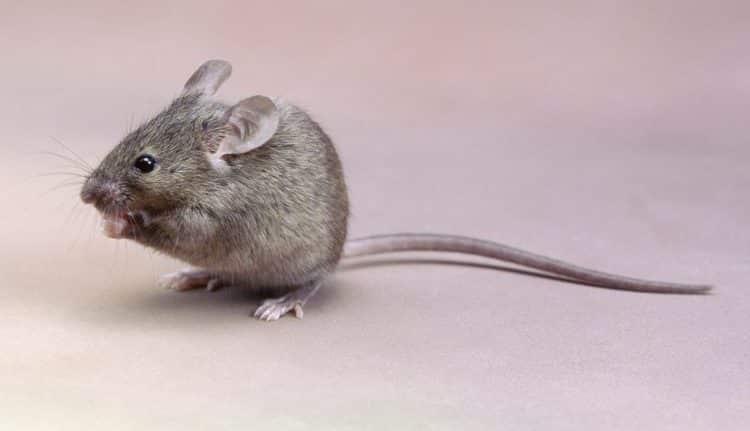 دو انشا در خصوص صحنه ورود یک موش به خانه