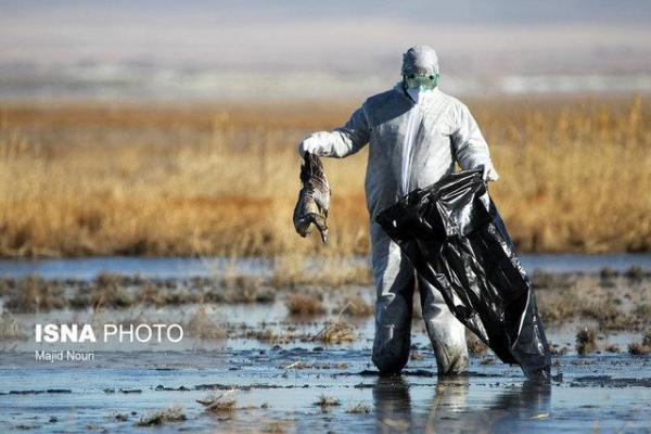 10 نکته درباره آنفلوآنزای فوق حاد پرندگان