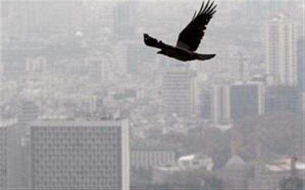 علت افزایش ازن در هوای تهران طی روزهای اخیر چیست؟