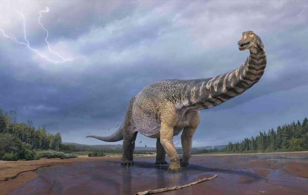 گونه تازه کشف شده در استرالیا می تواند عظیم ترین دایناسور زمین باشد